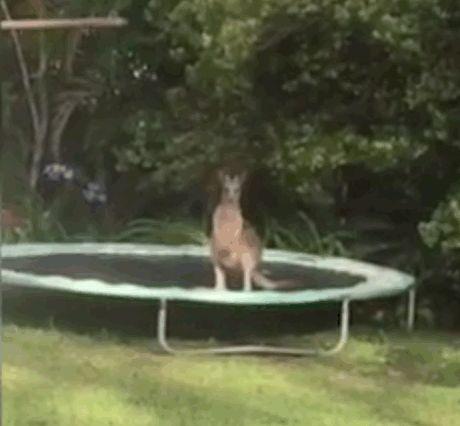 Dog Jumps On Trampoline Movie