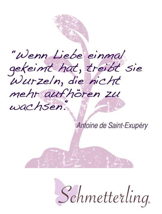 Trauspruch für die Hochzeit / schöne Zitate zum Thema Liebe / Heiraten ♥ www.schmetterling-brautkleid.de