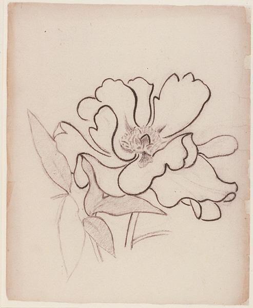 Henry van de Velde, flower study, 1890-99