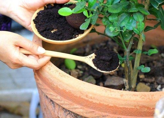 Richtig Und Vielfaltig Kaffeesatz Als Dunger Im Garten Anwenden Wohnideen Und Dekoration Kaffeesatz Gemahlener Kaffee Dunger Fur Pflanzen