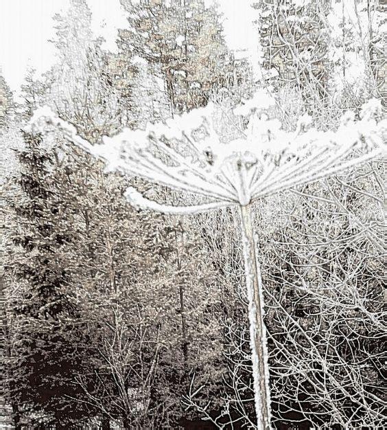Kyla ute frostformad natur