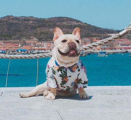 Frenchie Hawaiian Shirt Frenchie Puppy Happy Dogs French Bulldog