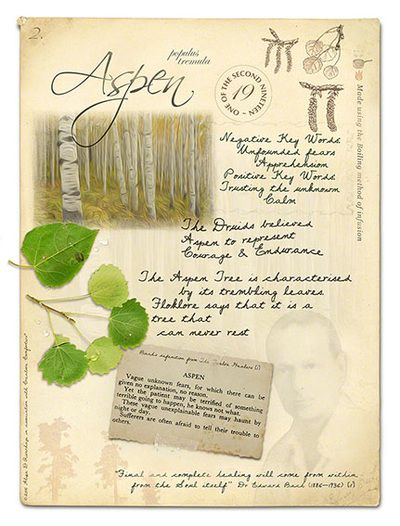 Aspen Bach Flower Remedy for Panic, Anxiety and Fear to Calm. Stock bottles, Genuine Remedies: