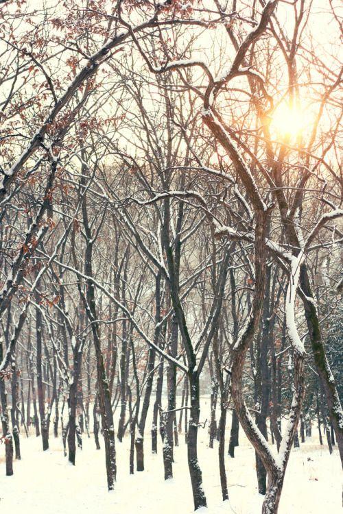 lovesouthkorea:  Nami island in winter (byReen Husnal)
