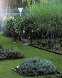 drac paca - les jardins remarquables - Jardin de l'Alchimiste, Eygalières