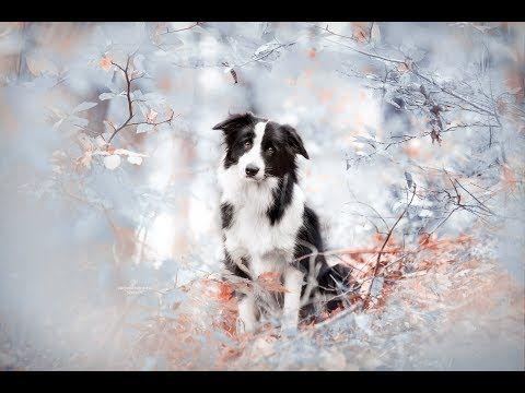 Herbstfarben In Einen Winterlook Umfarben Purrpaws Fotografie Natalie Grosse Youtube Herbstfarben Herbst Farben Winter Looks