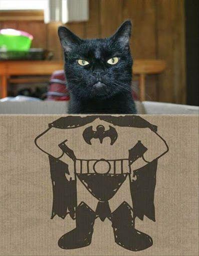 #gato #mascotas #animales En @TiendAnimal La Tienda Online para Mascotas nos gusta mucho esta foto. <a href=