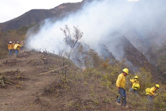 Suman Más de 150 Hectáreas de Pastizales Arrasadas por Incendios en la Costa.   noticiasdechiapas.com.mx/nota.php?id=82… pic.twitter.com/ttKF4yTJ5z