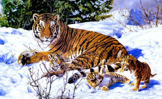 Mama Tiger and cubs  in the snow