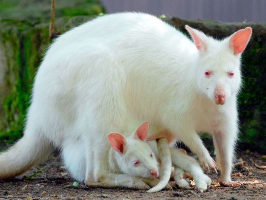 animales albinos - photo #49
