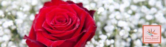 Il fiore di oggi: la rosa rossa  www.fioreriasarmeola.com