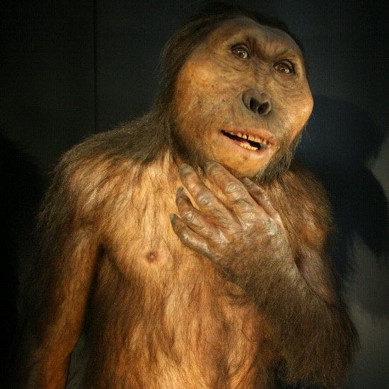 KeSimpulan | Jurnal Penelitian: Perubahan Diet Evolusi Hominid