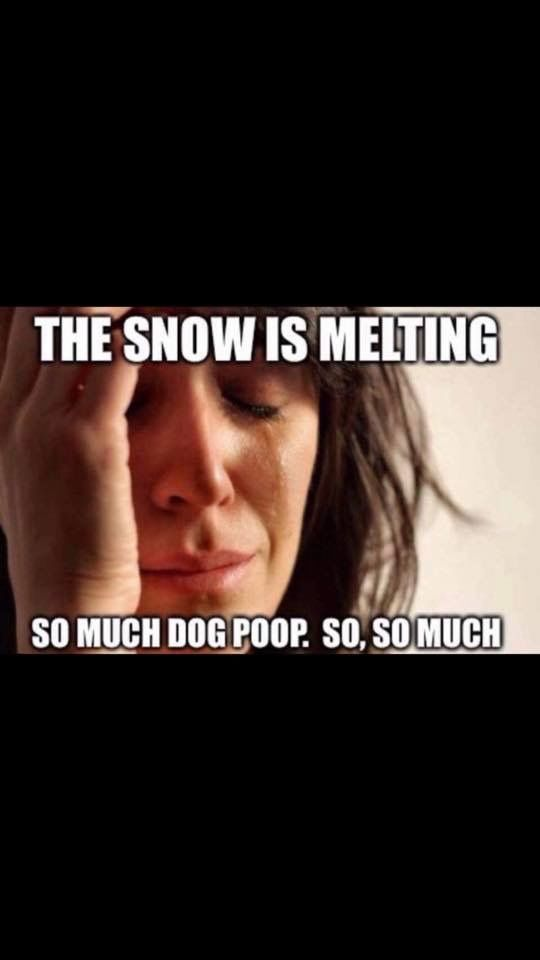 Pin By Sonya Estes On Snow Funny Quotes Giggle Dogs Pooping