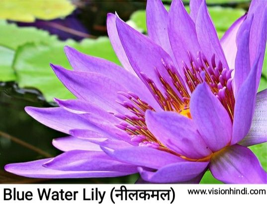 60 List Of Rare Flowers Name In Hindi With Picture Flower Names Rare Flowers Flowers Name In Hindi