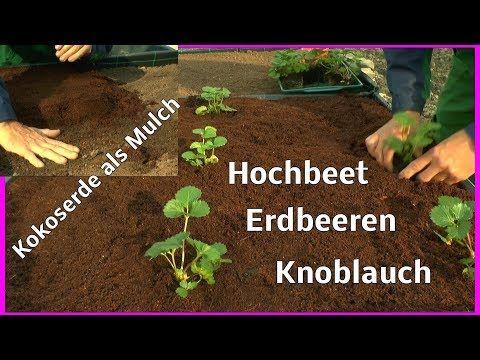 Youtube Hochbeet Mediterrane Pflanzen Erdbeeren