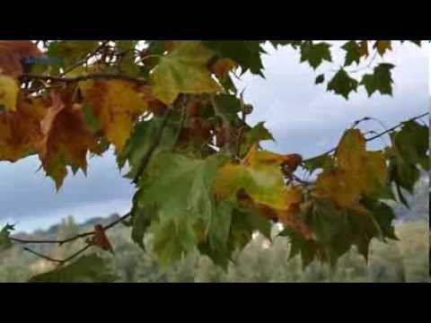 MICHEL LEGRAND - Les moulins de mon coeur - YouTube