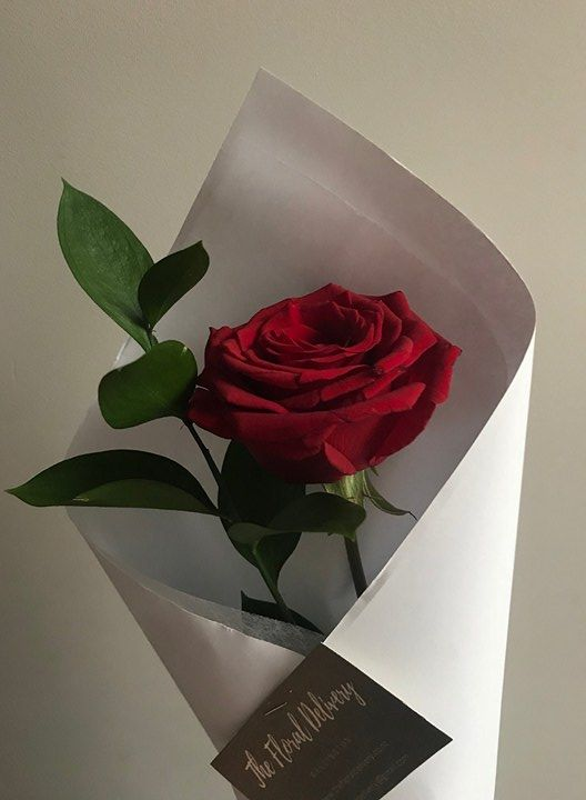 Single Red Rose Valentines Day Anniversary Love Flowers The Floral Delivery Wellington Nz Florist Single Red Rose Single Rose Bouquet Rose Delivery