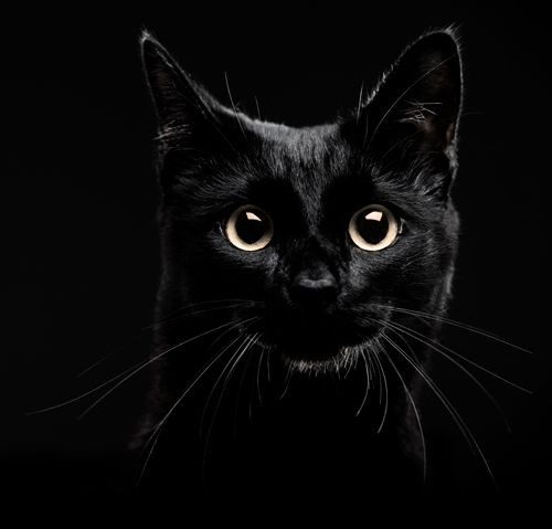 black cats - Cerca con Google