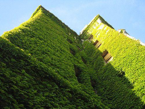 Jardines verticales, una nueva forma de arte urbano   Servicio Informativo de la Construcción
