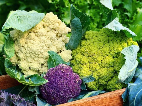 I Planted 4 Different Colours Of Cauliflower And Broccoli This Year And Although Not All Of Them Have Been Successful 3 Out Cauliflower During The Day Plants