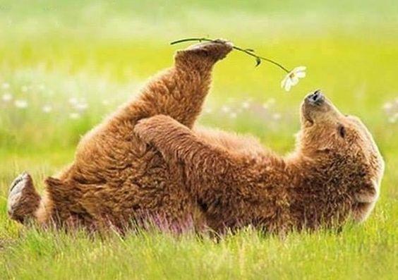 花とかわいいクマ