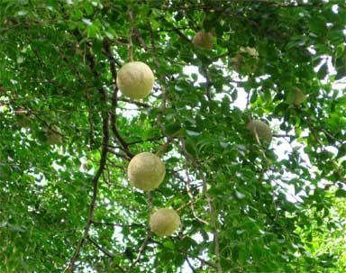 Republic Day Essay in Hindi                                                 Short Essay On Importance Of Trees in Hindi Language ped lagao paryavaran  bachao jeevan desh