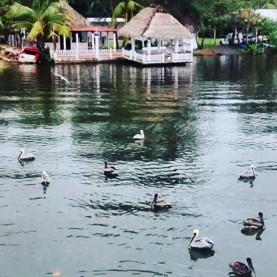 On instagram by marcelavicente11 #landscape #contratahotel (o) http://ift.tt/1Q6W0ZR #CostaEsmeralda #Veracruz