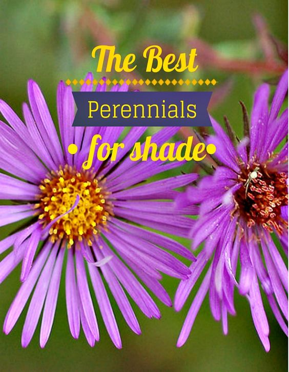 The Best Perennials For Shade Shade Plants Flower And 400 x 300