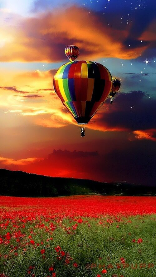 Hot air balloons over poppy flower field art