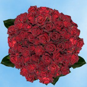 150 Fresh Cut Dark Red Roses Long Stem | Black Baccara Roses | Fresh Flowers Wholesale Express Delivery | Perfect for Birthdays, Anniversary or any occasion. >>> Check this awesome product by going to the link at the image.