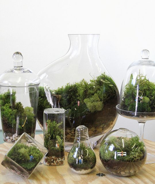 terrariums...but i've never been able to keep moss alive!