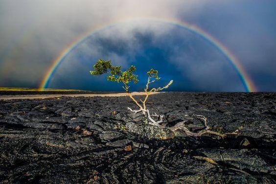 ハワイの溶岩と樹と虹