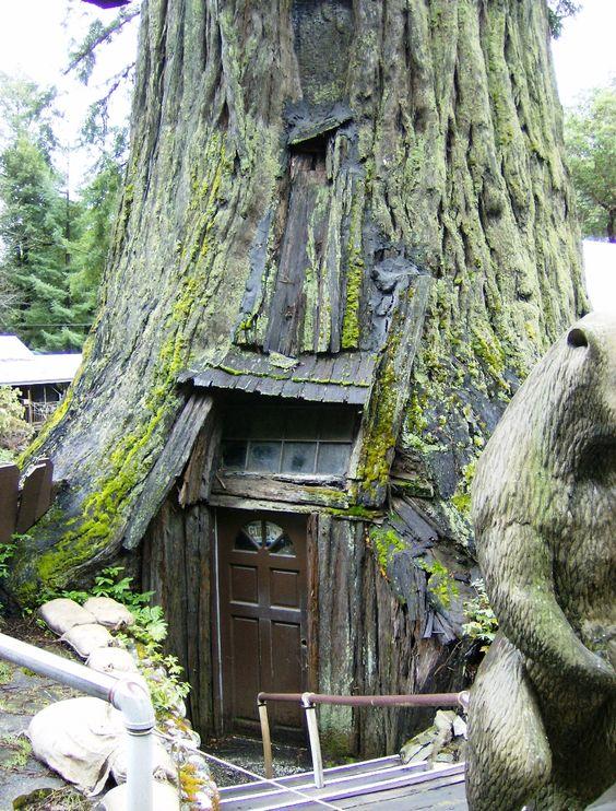 Million Dollar Tree Houses