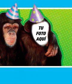 Fotomontaje con un mono disfrazado con un gorro de fiesta.