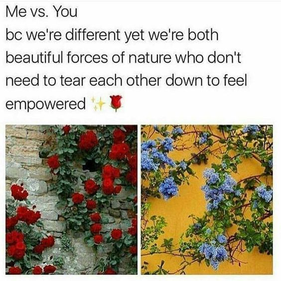 What's that quote about how a flower doesn't compare itself to the flower growing next to it, it just blooms. Keep blooming my loves. 💜💙💚🌈🌞  Meme by @ms.brownfeminist: