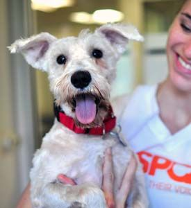 Holy cow this is AWESOME:  Wish we could go:  Got plans this summer? Well, how about a FREE vacation to Chicago? Join Team ASPCA and we'll fly you out for the Rock 'n' Roll Chicago Half Marathon, taking place on July 22. Aside from the FREE airfare, you'll receive training from professional coaches, complimentary weekend stay at our team hotel and an invitation to the hottest kickoff celebration!