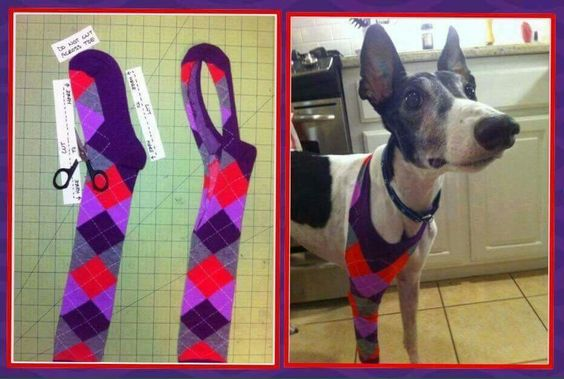 If your dog has a wounded leg use a sock to make a bandage so she can't lick it