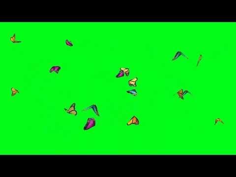 Kumpulan Green Screen Kupu Kupu Indah Berterbangan Youtube Kupu Kupu Ilustrasi Poster Animasi