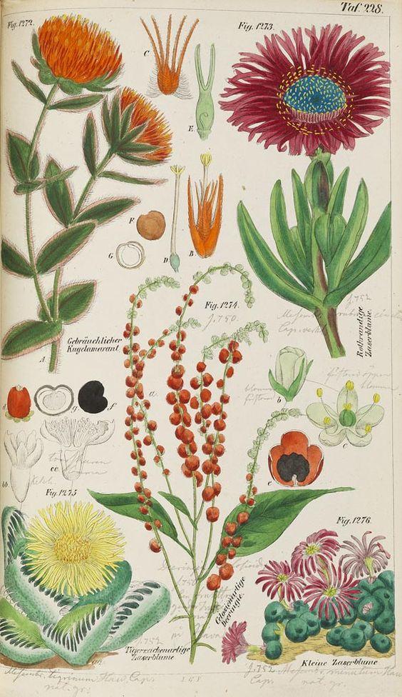 Wilhelm Ludwig Petermann - Das Pflanzenreich. 2 Bde. 1847