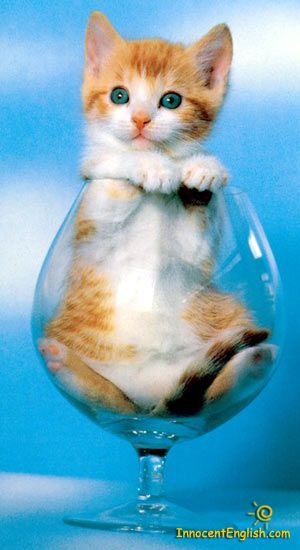 if only every glass of wine came with a kitten at the bottom...