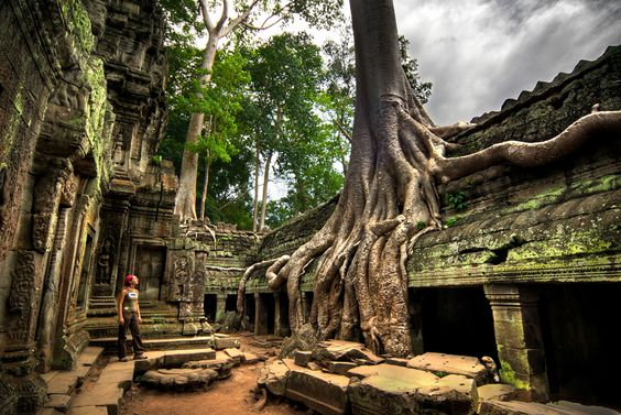 in Ta Prohm temple, Angkor, Cambodia