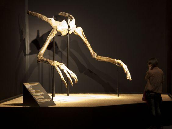 Fossile holotype de Deinocheirus