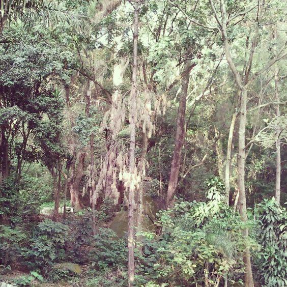 Parque das Hortênsias - Taboão da Serra - SP. II #TaboãoDaSerra