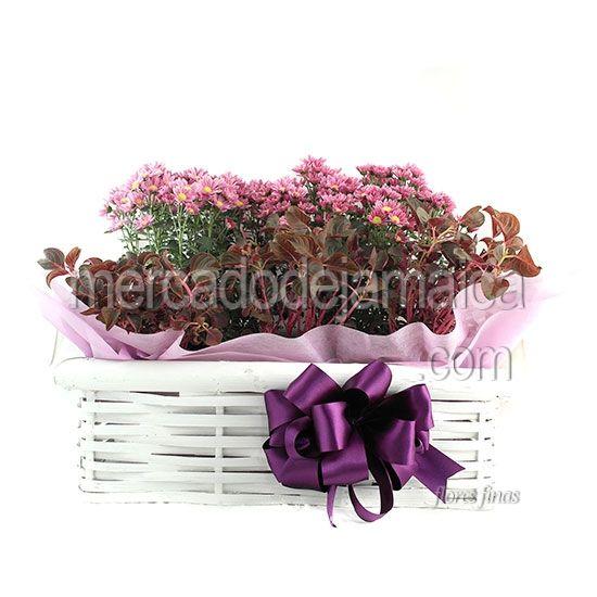 Canasta con Margaritas Lila| Envia Flores