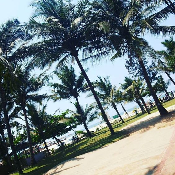 #Beach #Goa #IncredibleIndia #beauty_of_the_beach #Utorda_Goa #beachScenes #CoconutTrees #StandingTall #Blue_skys #white_Sands #nature_lover #iphoneClicks #instaLover #instapost by wireless_brains_since_0902
