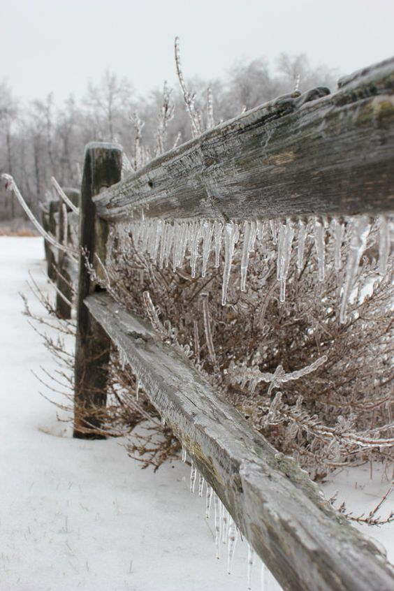 Ice Storm Fence Photo Print by LittleBrownDoogPhoto on Etsy, $10.00