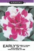 """Double Rose and White  Height 25-38 cm.(10-15"""") Offers the same superior performance as the single madness series. Pkt(Approx. 50 seeds)"""