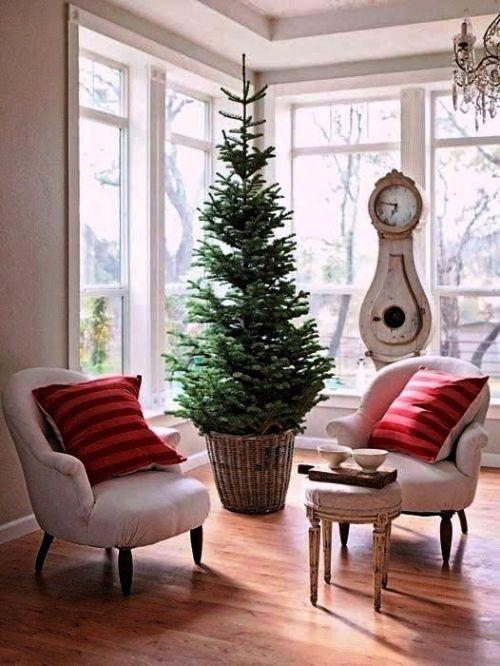 Weihnachtsbaum Im Topf Richtig Pflegen Und Noch Viele Jahre Bewundern Mit Bildern Weihnachtliches Zuhause Urlaub Dekorieren Skandinavische Weihnachten