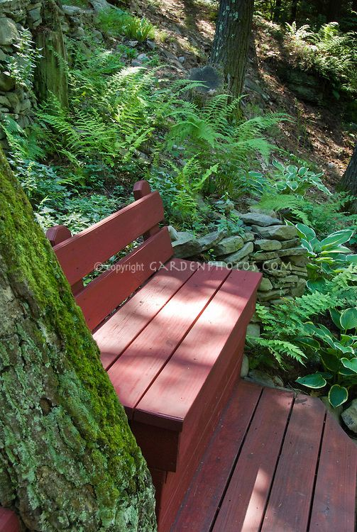 Shaded wooden garden bench with ferns tree trunk on a for Tree trunk garden bench
