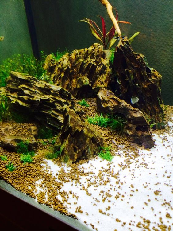 200l juwel lido with dragon stone fish freshwater and for Aquarium 200l